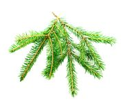 Fir branch Royalty Free Stock Photos