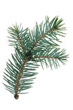 Fir branch. Little green fir branch isolated on white background Stock Photo