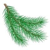 Fir branch. Branch on white background. vector illustration Stock Photography