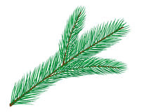 Fir branch. For christmas decoration, drawn in Illustrator. EPS available (saved in AI8-EPS format Stock Photography