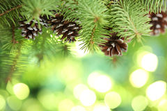 Fir branch on abstract lights background stock image