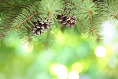 Fir branch on abstract lights background Stock Images