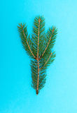 Fir branch Royalty Free Stock Images