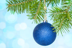 Fir branch with a blue bauble Stock Photos