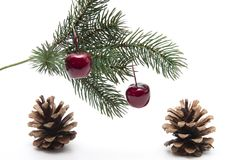 Fir branch with cherries Stock Photography