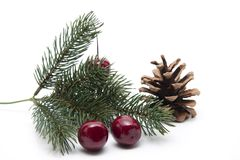 Fir branch with cherries Royalty Free Stock Photo