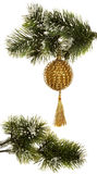 Fir branch and Christmas decorations Stock Photos