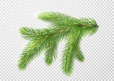 Fir branch. Christmas tree, pine needles  on transparent background. Fir branch. Christmas tree decoration, pine needles  on transparent background. With light Stock Image