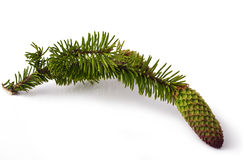 Fir branch Stock Photography