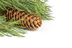 Fir branch with cones Stock Photography
