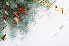 Fir branch with cones Royalty Free Stock Photo