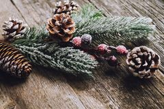 Fir branch with cones and berries on wood background. Snowy fir branch with cones and berries on wood background Stock Image