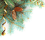 Fir branch with cones Royalty Free Stock Photography
