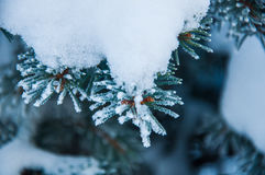 The fir branch covered by the snow Royalty Free Stock Photo
