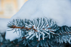 The fir branch covered by the snow Royalty Free Stock Photos