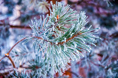The fir branch covered by the snow Stock Photos
