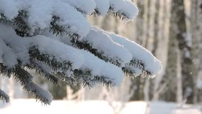 Fir branch covered with snow in snowfall. 1 stock footage