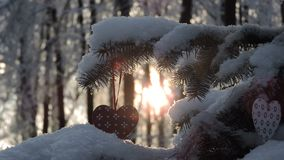 Fir branch covered with snow in snowfall on sunset. 1 stock video