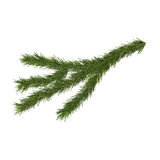 Fir branch, 3d illustration. Isolated on white background Stock Image