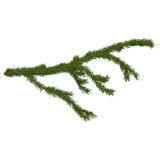 Fir branch, 3d render Stock Photos