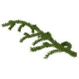 Fir branch for design, 3d render Stock Photos