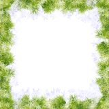 Fir Frame for Christmas. Fir branch frame for christmas designs Stock Photography