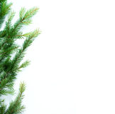 Fir branch isolated on white Stock Images