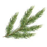 Fir Branch Isolated on White Background. Christmas Tree. Vector Illustration Royalty Free Stock Photos