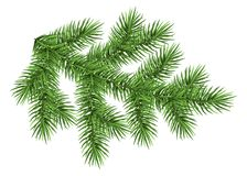 Fir branch isolated on white background. Green spruce. Realistic Christmas tree. Vector illustration for Xmas cards, banners, flyers, New year party posters Stock Photography