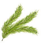 Fir Branch Isolated on White Background. Illustration Fir Branch Isolated on White Background - Vector Stock Photos
