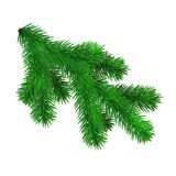 Fir branch isolated on white background. Vector. Illustration Royalty Free Stock Photos
