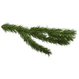 Fir branch isolated on white, 3d illustration. Isolated on white background Royalty Free Stock Image