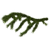 Fir branch isolated on white, 3d illustration Stock Photography