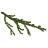 Fir branch isolated on white, 3d render Stock Photo
