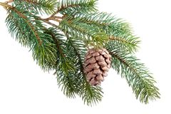 Fir branch with pine cone Stock Photo