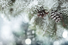 Fir branch on snow Royalty Free Stock Photo