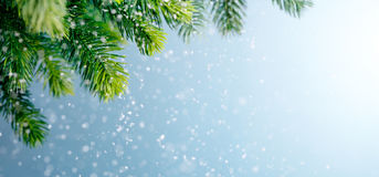 Fir branch in snow Stock Photography
