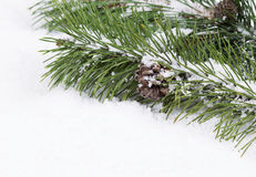 Fir Branch with snow and pine cone Stock Photo