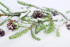 Fir branch on snow Royalty Free Stock Photography