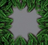 Fir Branch Square Frame on Transparent Background. Vector illustration Royalty Free Stock Photos