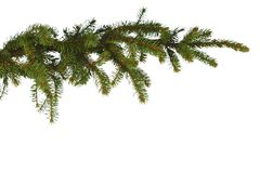 Fir branch on white Stock Image