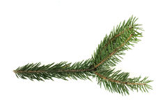 Fir branch white isolated Stock Photos