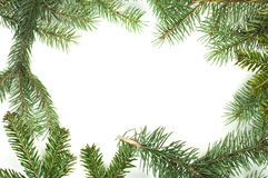 Fir branch white isolated Stock Image