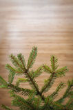 Fir branch on wood surface, can be used as a background Royalty Free Stock Photo