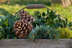 Fir branches Royalty Free Stock Photo