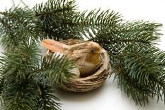 Fir branches with bird nest Royalty Free Stock Photography