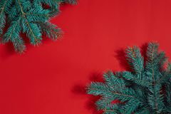 Fir branches border on red background, good for christmas backdrop. Top view. Flat lay. Copy space. Still life. Christmas and New year Royalty Free Stock Image