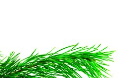 Fir branches border on white background, good for christmas backdrop.  stock images