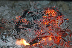 Fir branches burning Royalty Free Stock Images