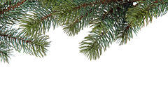 Fir branches of a christmas decoration. Several fine fir branches. All isolated on white background Stock Images